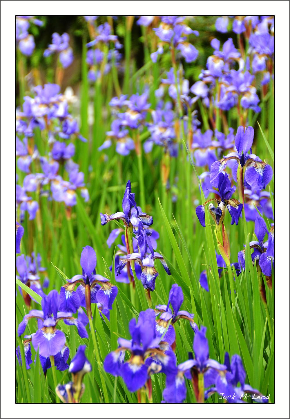 Iris patch_matte.jpg