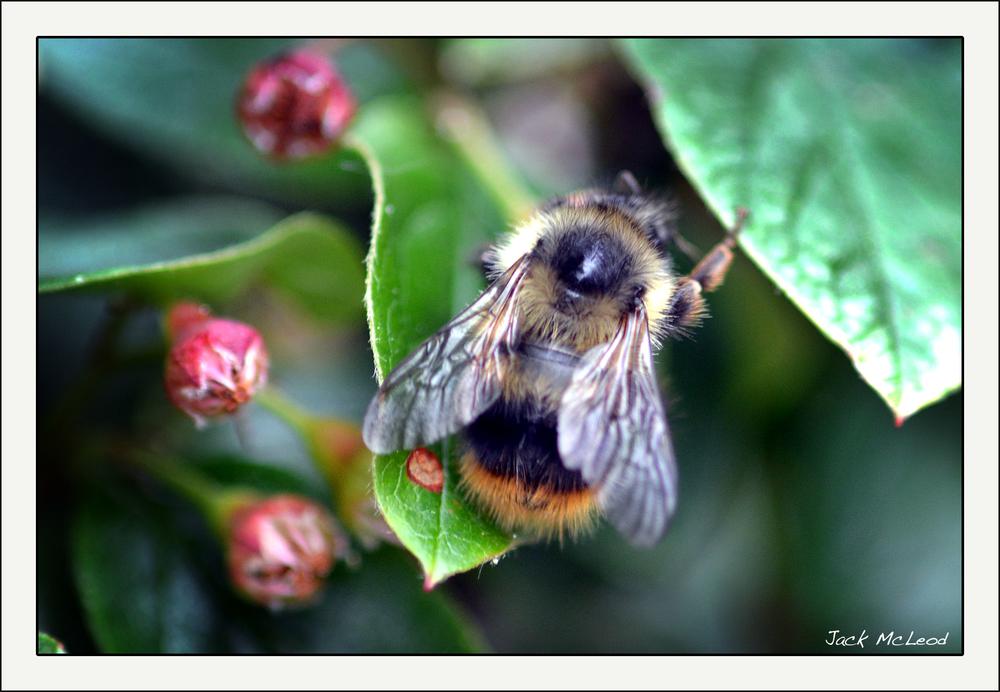 bumblebee_matte.jpg
