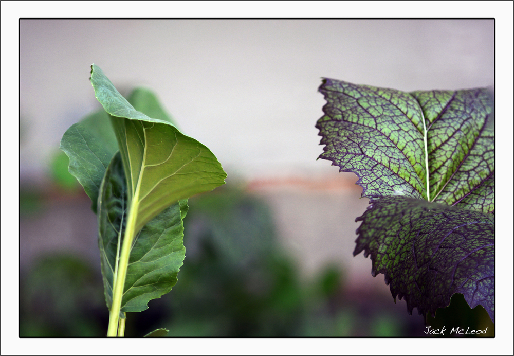 kale&mustard_matte.jpg