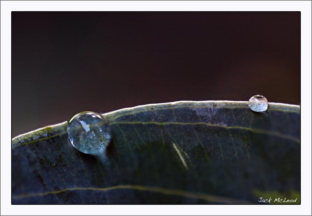 WaterDrops2&leaf_matte.jpg