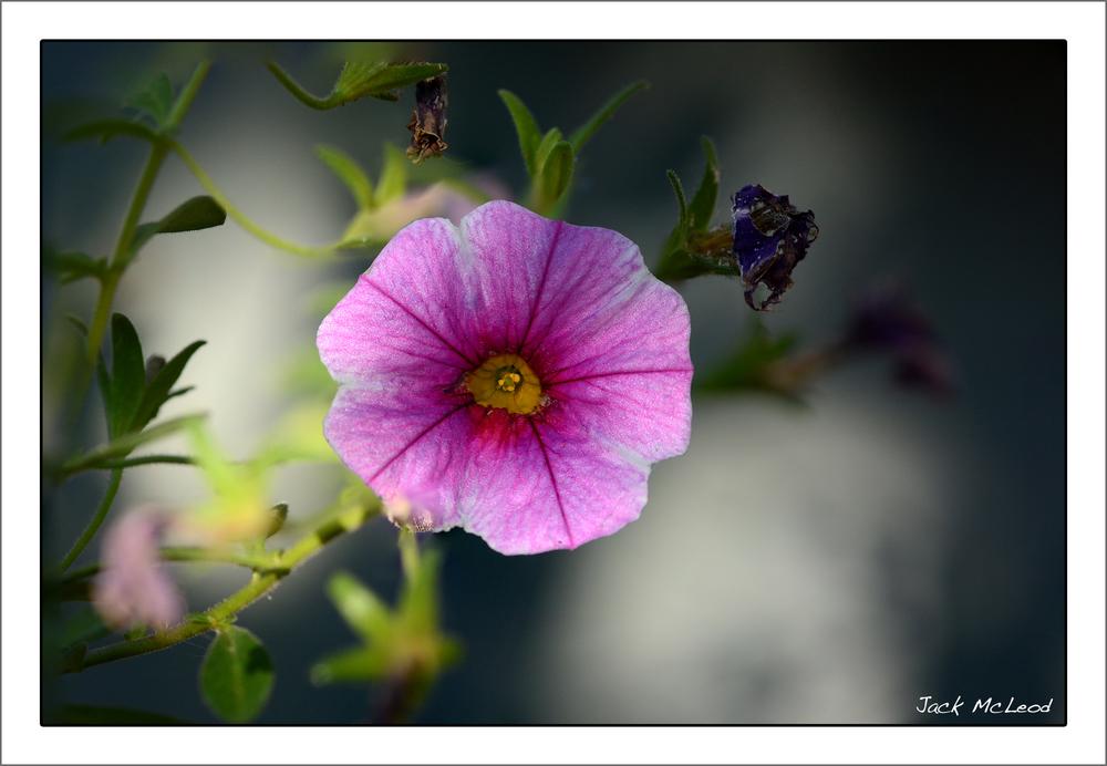 pinkflower_matte.jpg