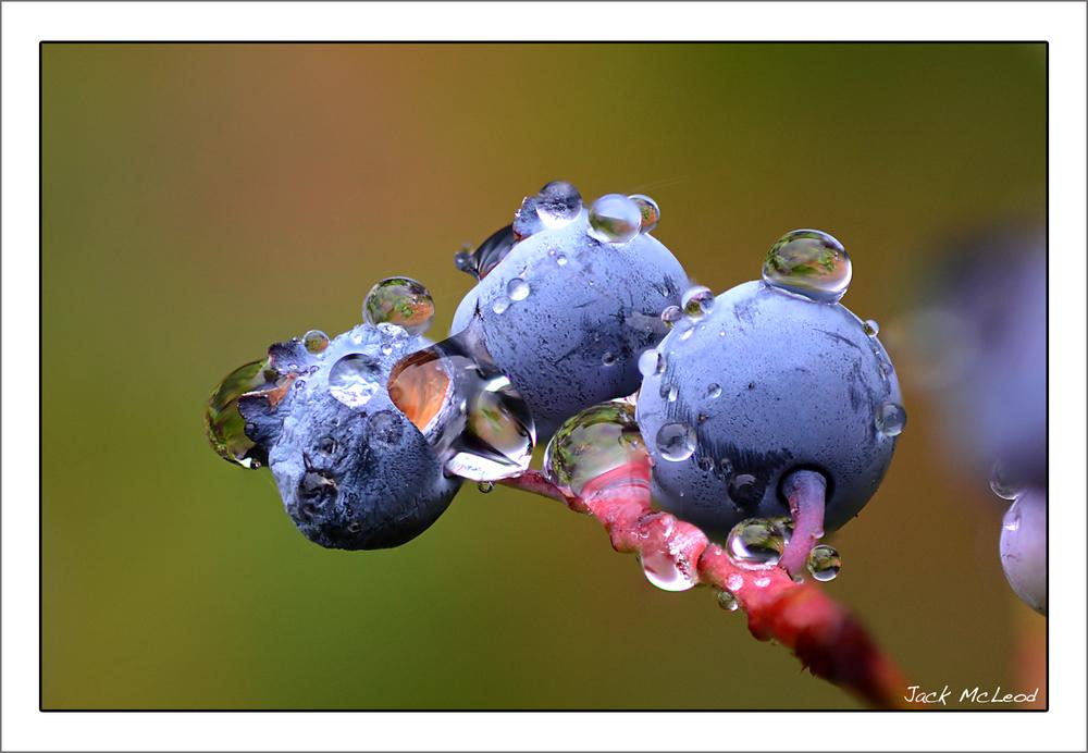 blueberries3_raindrops_matte.jpg