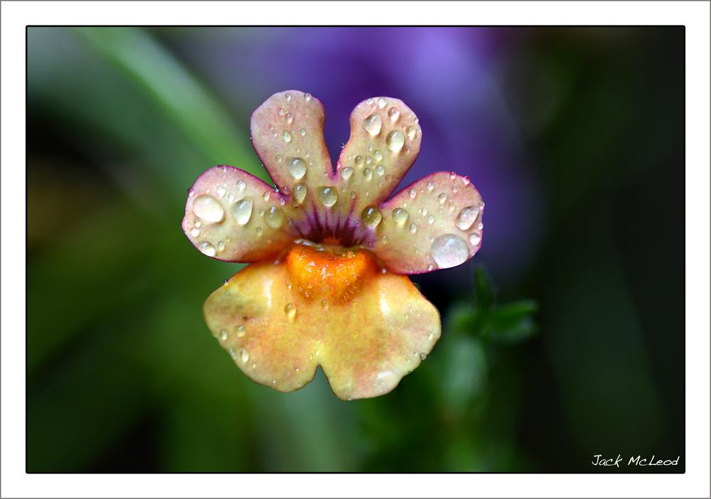 unknownflower_raindrops_matte.jpg