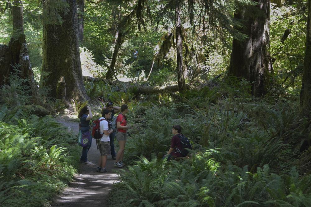 Hoh Rainforest walk.jpg