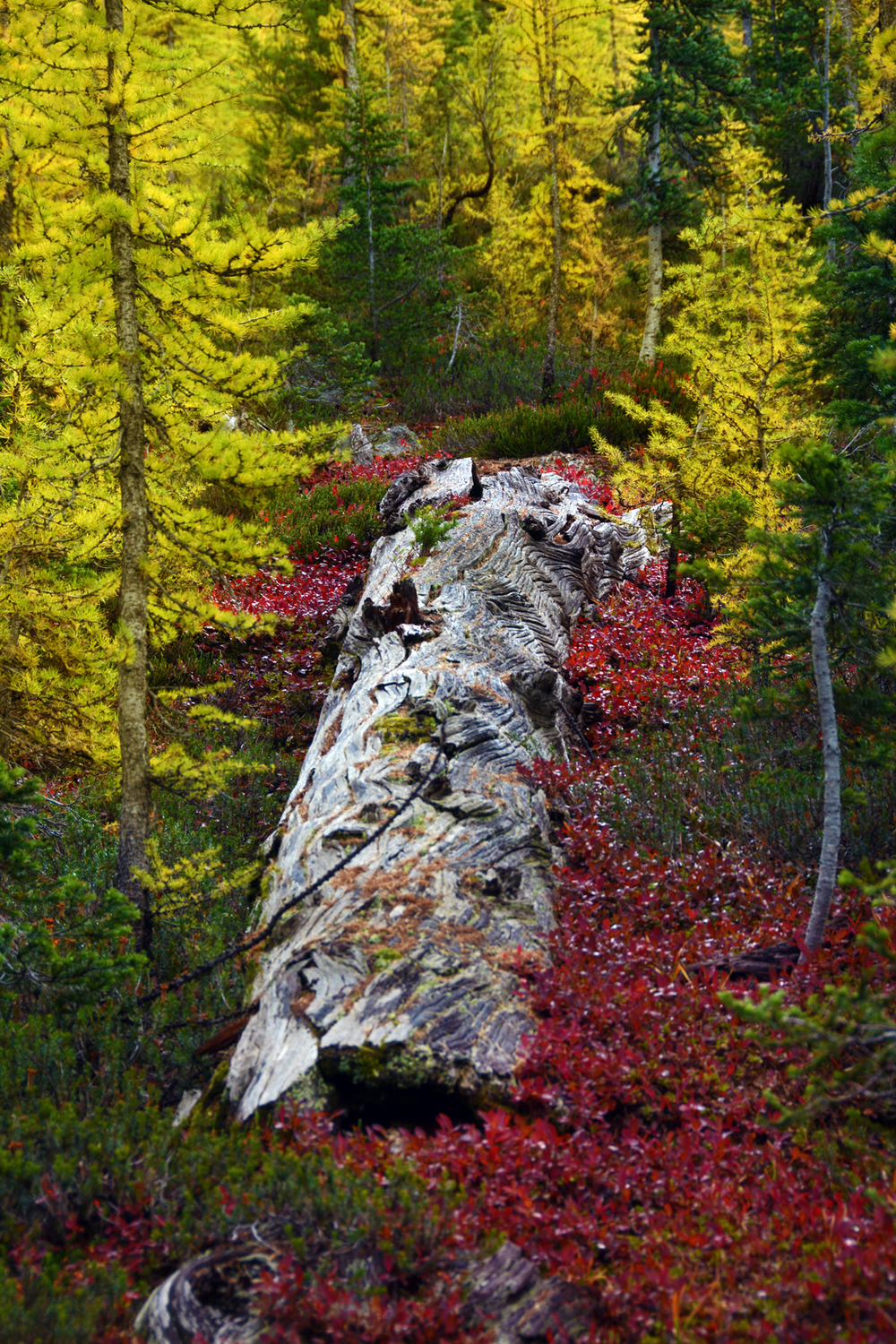 Log-FallColors.jpg