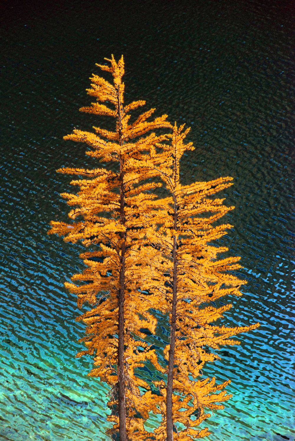 2larch-aquawater.jpg