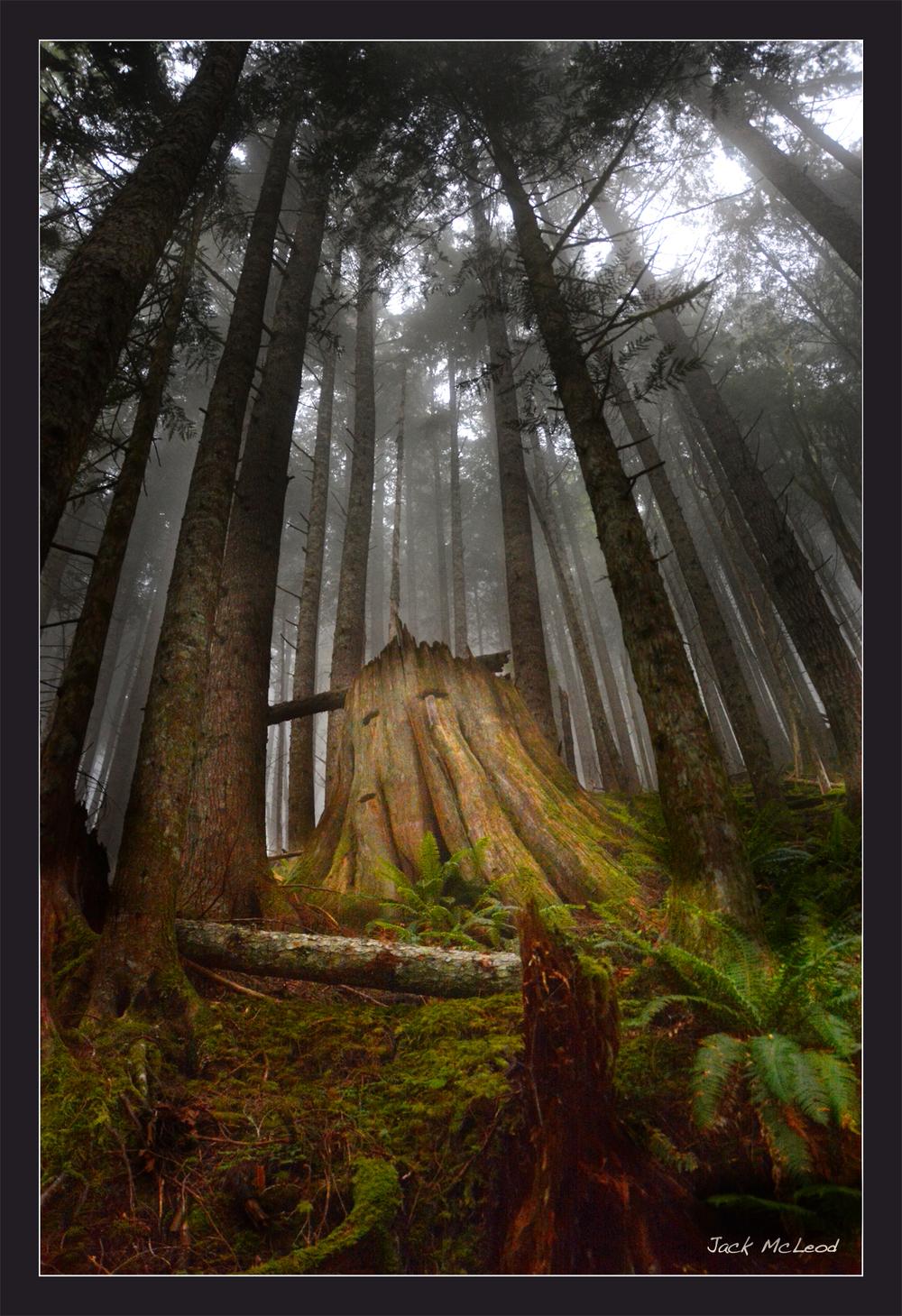 WH_earlymorningwoods_matte.jpg