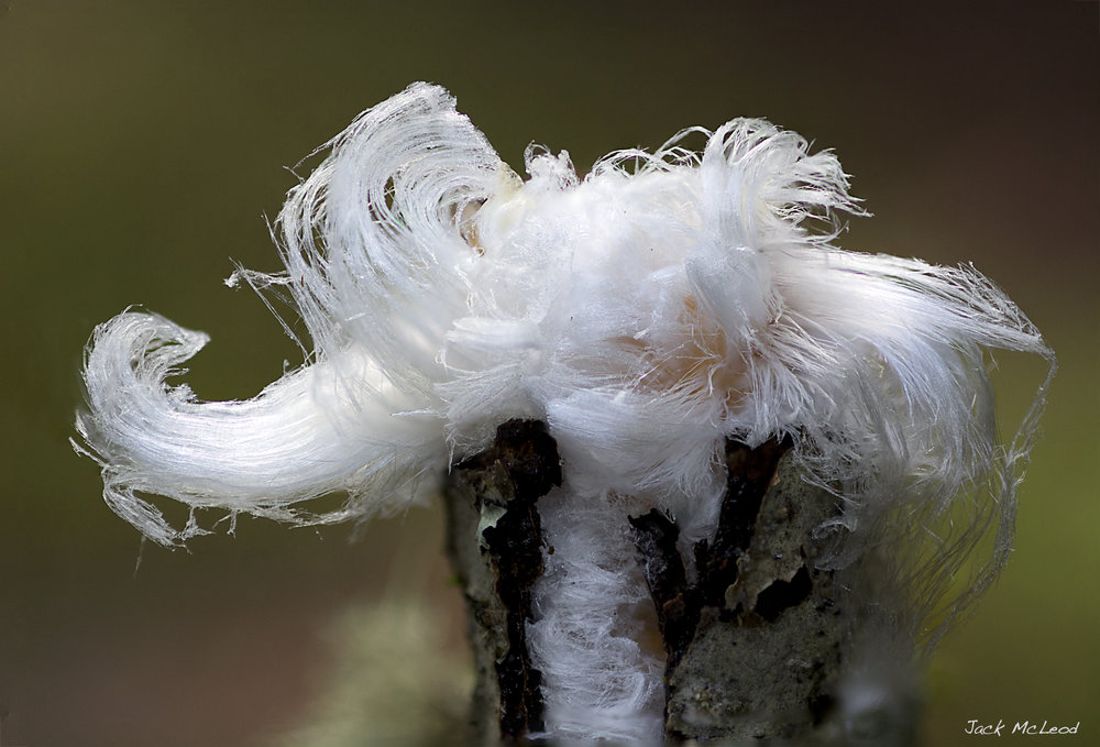 hair ice flower3.jpg
