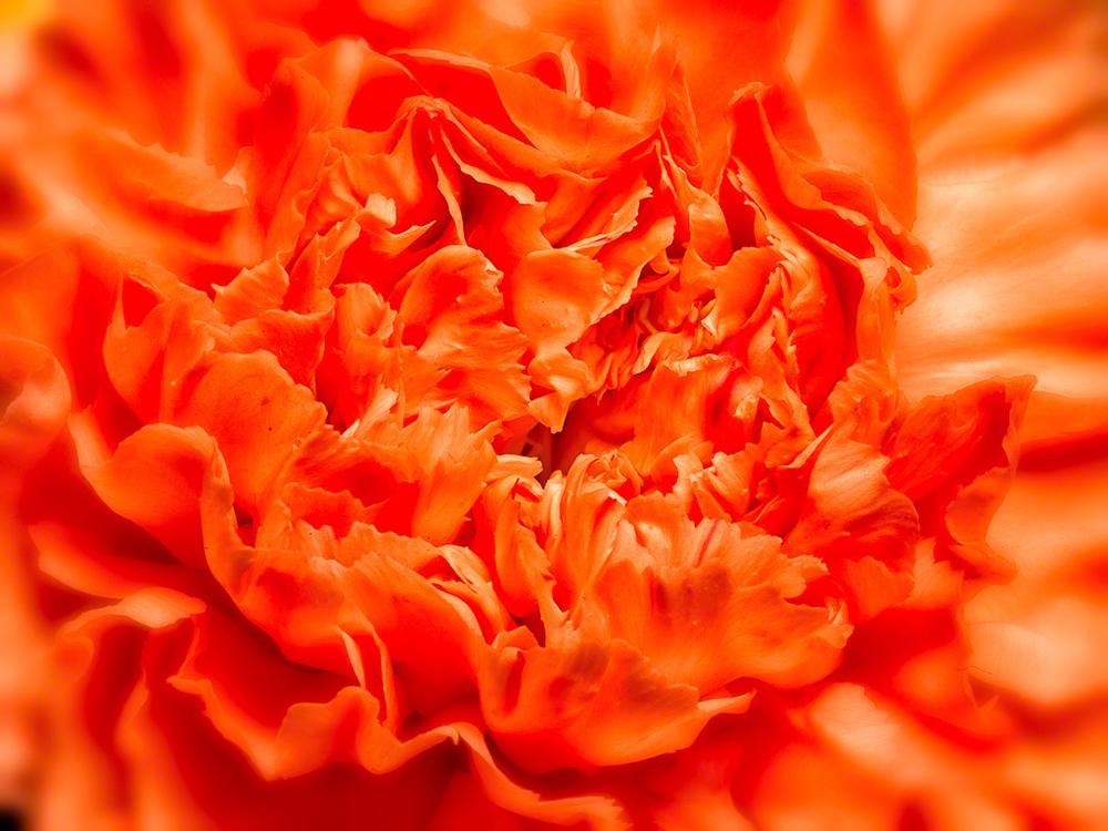 Orange Petals-10
