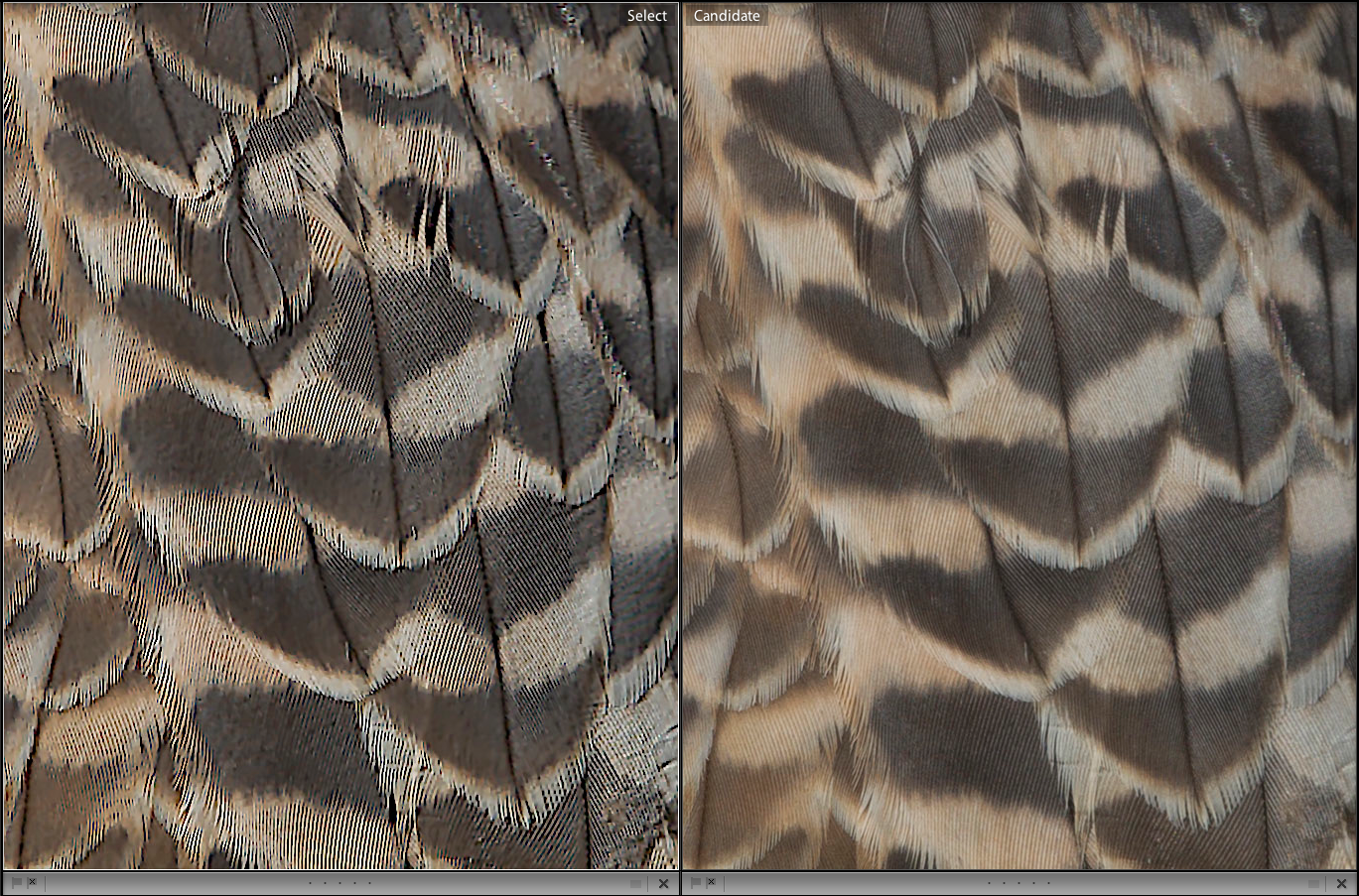 Compare the feather detail, Piccure+ on the left, unmodified on the right