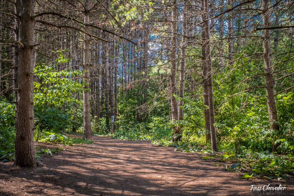 Forest Details