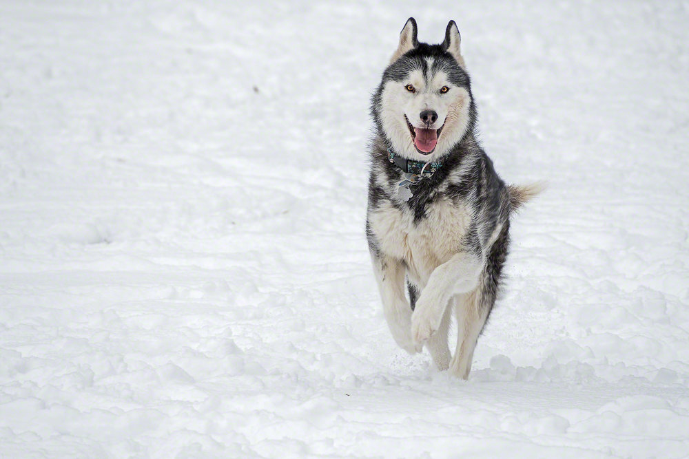 More Snow, More Fun