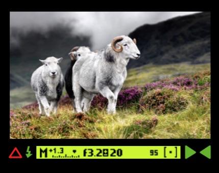 viewfinderdisplay.jpg