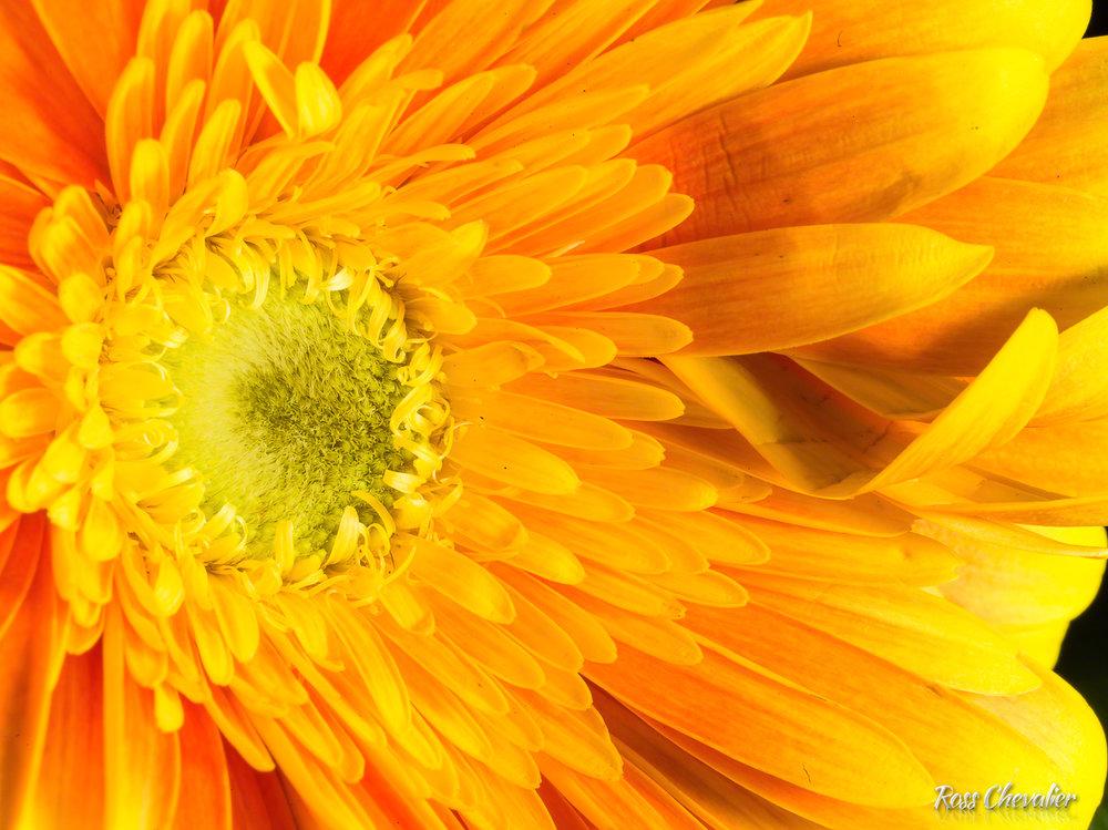 H5D-50C_Flowers-036.jpg
