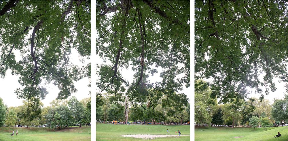 "This Clark Park tree has great branches that envelop me like arms when I sit down to write beneath it. I often think about all it must have witnessed over the years, being a grand still spectator to human drama unfolding in ""The Bowl."""