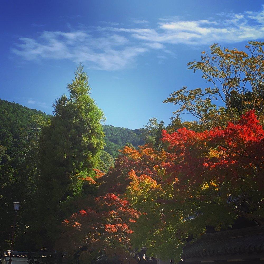 これは先週、南禅寺で撮りました。