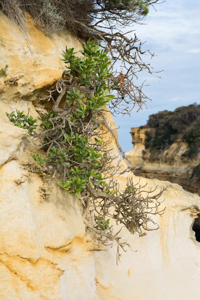 Great Ocean Road sandstone green slow diaries