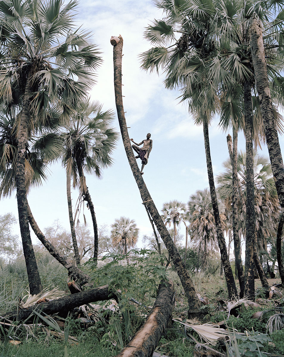 Kyle Weeks, Palm Wine Collectors, 2015