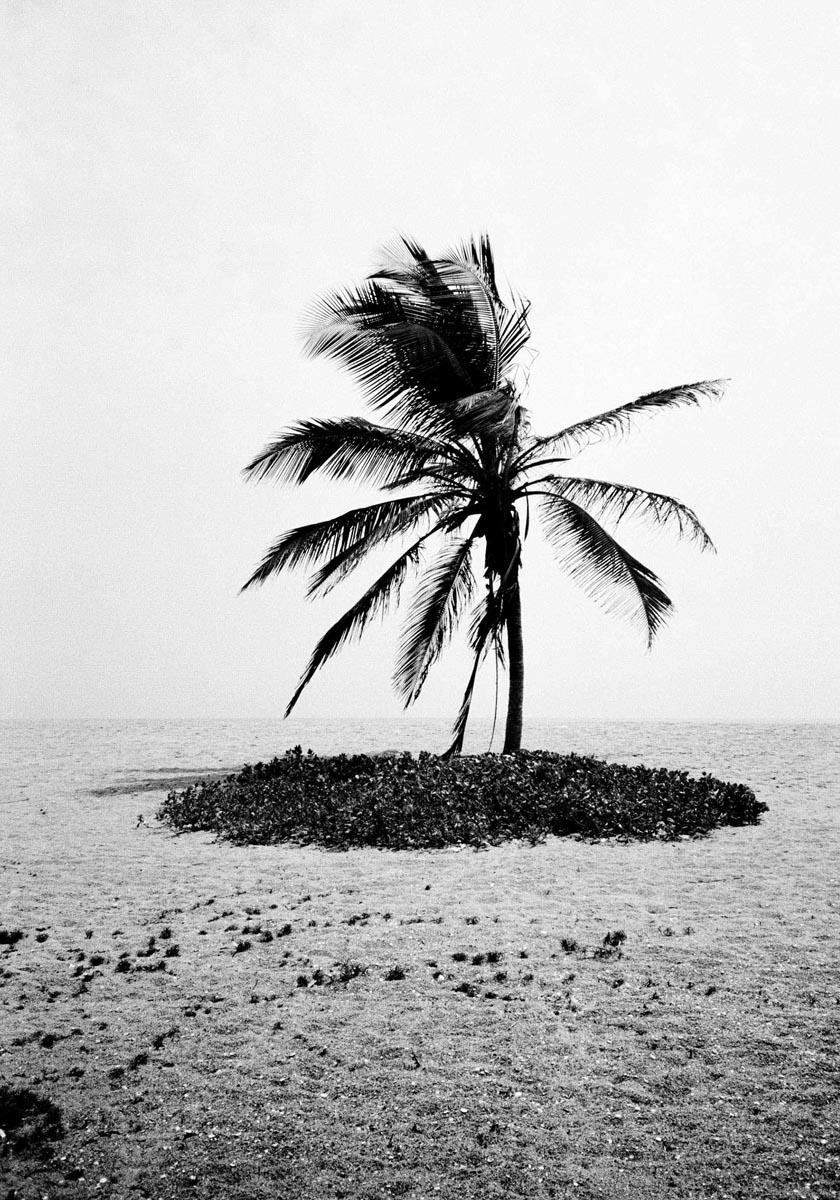 Palmtree_Weke_Benin_17.5x25cm_NamsaLeuba_2017.jpg
