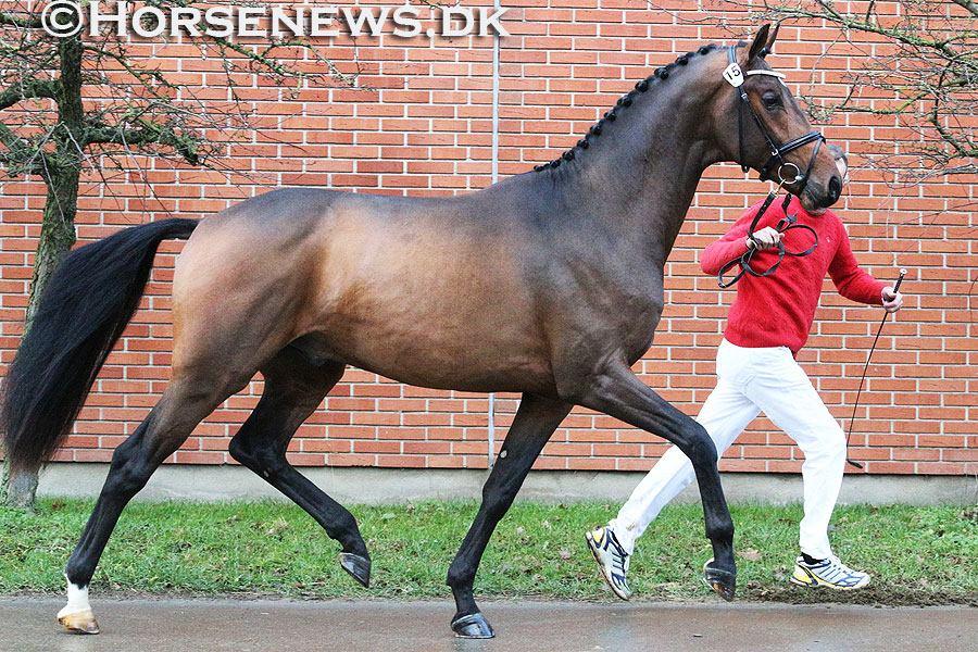 Photocredit: Horsenews