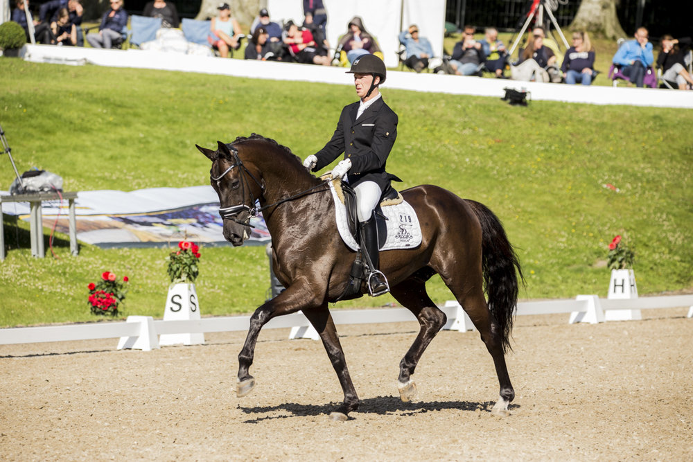 Ellegaardens San Droneur and Jacob Nørby Sørensen at Danish Warmblood Young Horse selection for World Championships for Young Horses - photo: H2R