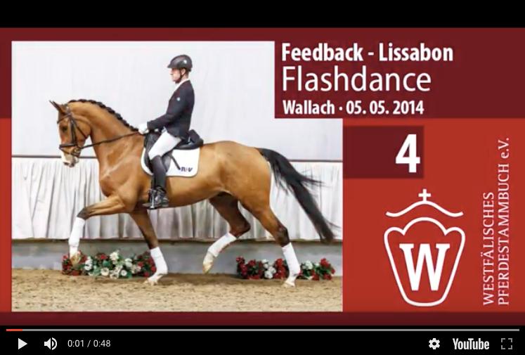 Top price catalog no 4 by Feedback / Lissabon - sold for 101.000 euros - photo Westfalenpferde