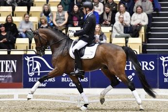 Bronze medallist from Ermelo last year, Danish Warmblood champion stallion, Hesselhøj Donkey Boy will be shown by his steady rider Jan Møller Christensen. Photo credit: Ridehesten.com