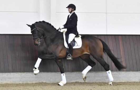 Jovian (2014) by Apache / Tango - photo: Helgstrand Dressage
