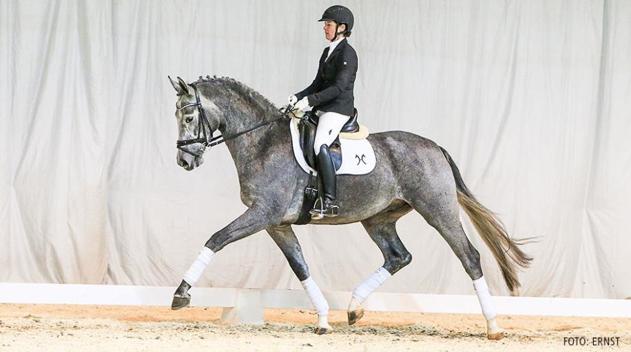Top price riding horses 53.000 by Belantis/Sandro Hit