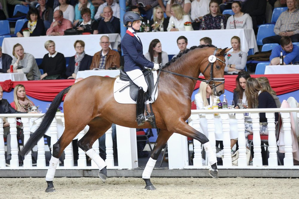 Most expensive horse sold to Spain for 185.000 euros