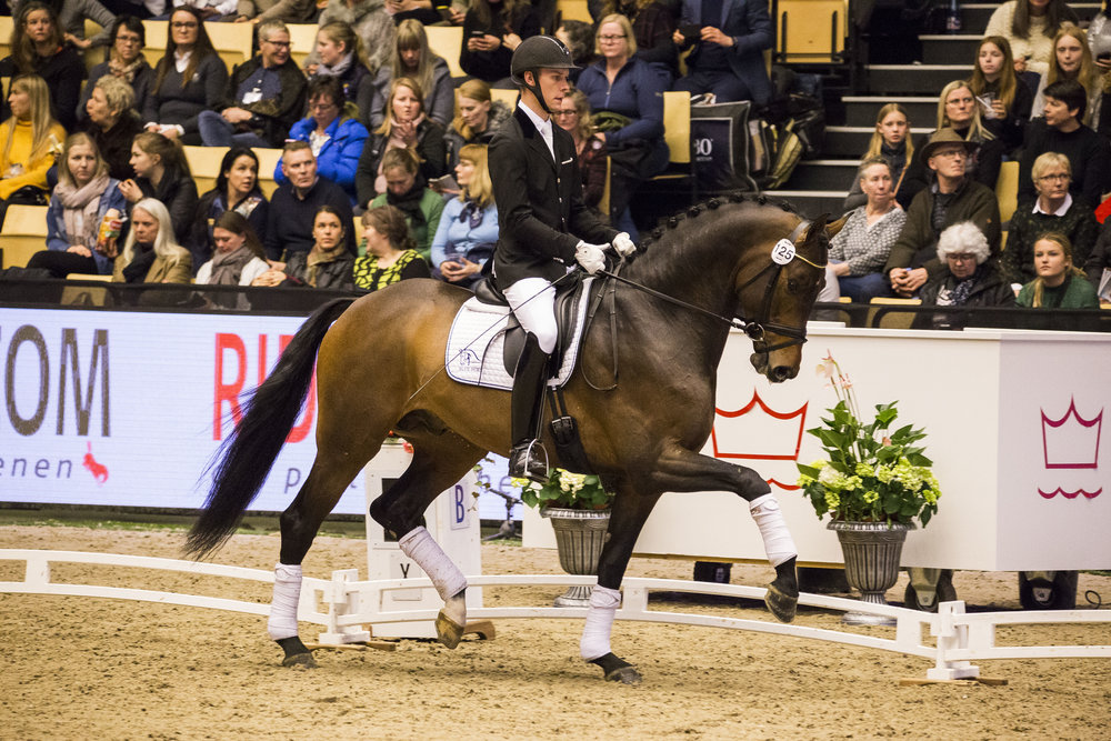 Daniel Bachmann Andersen and Blue Hors Zackerey at Danish Warmblood stallion show 2018 - photo credit: H2R