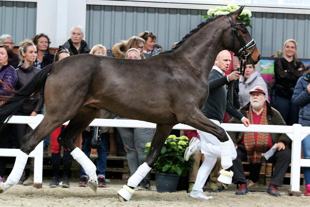 De Bruyne by De Niro / San Amour - photo credit: Horsenews.dk