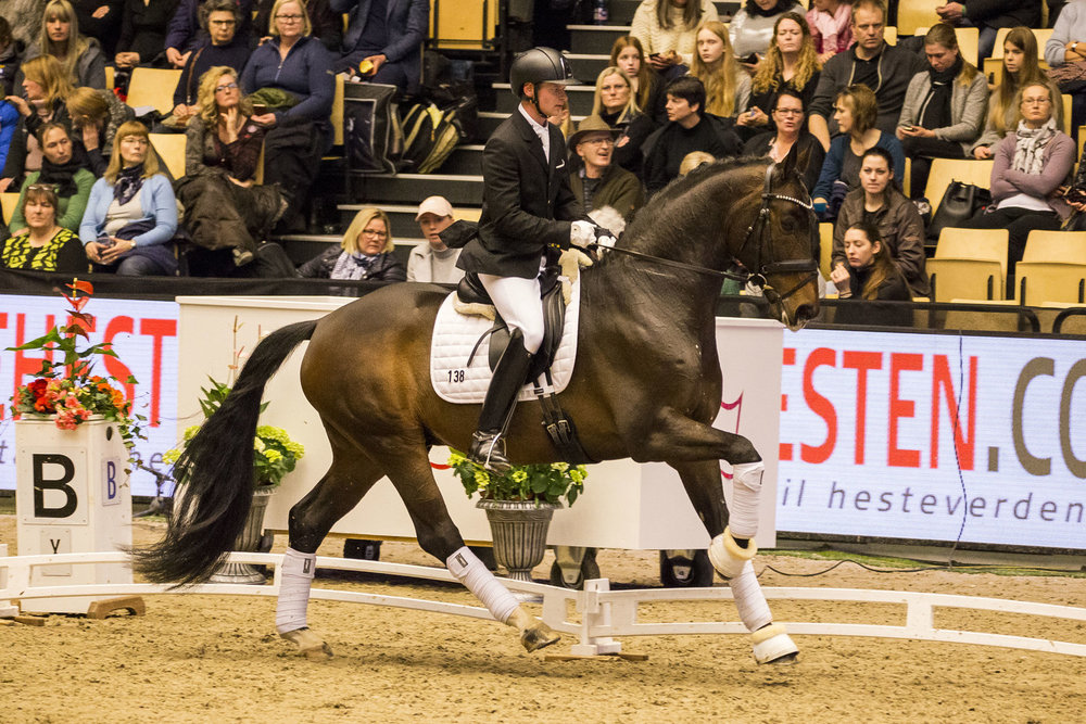 For Emotion and Kenneth Damgaard at Danish Warmblood stallion show 2018. Photo credit: H2R