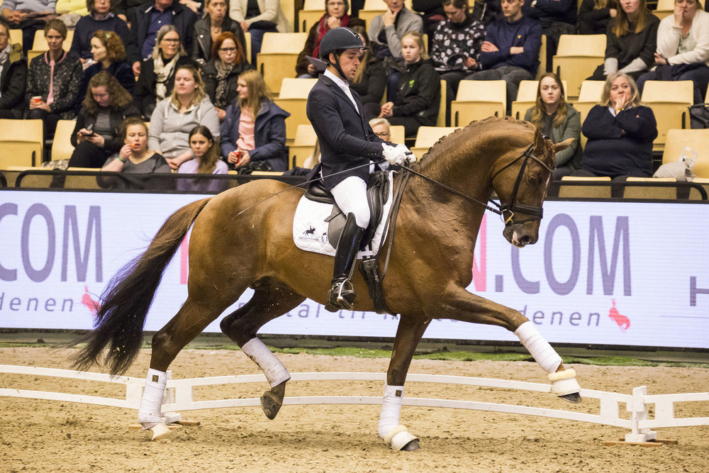 Severo Jurado Lopez with D´avie at Danish Warmblood stallion show 2018 - photo credit: H2R
