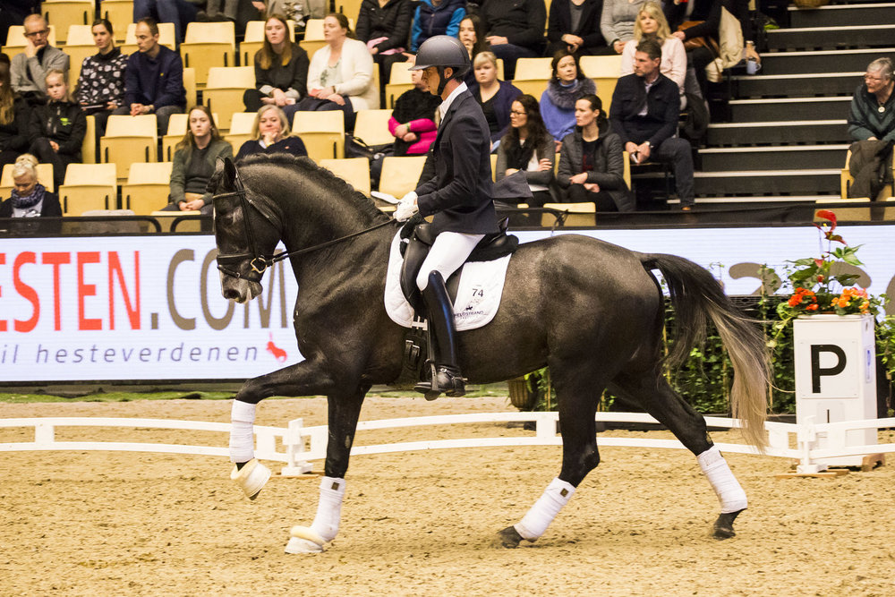 Tørveslettens Sylvester and Eric Guardia Martinez at Danish Warmblood stallion show 2018 - photo credit: H2R