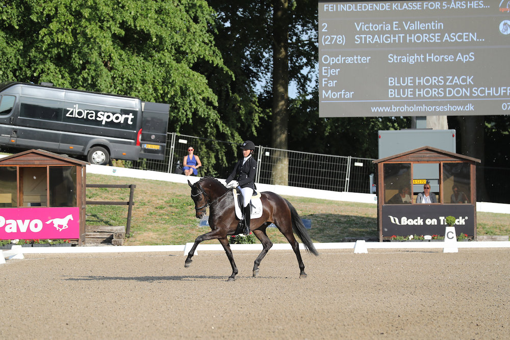Straight Horse Ascenzione by Blue Hors Zack/Blue Hors Don Schufro. Rider Victoria E. Vallentin