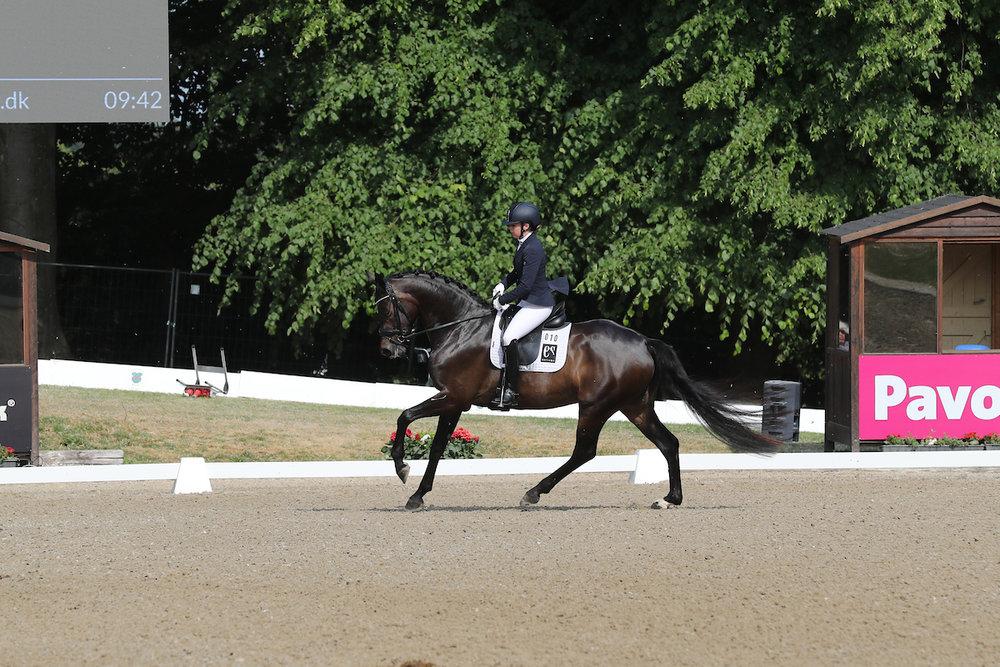 Atterupgaards Delorean by Bon Bravour/Sandro Hit. Rider Selina Vittinghus