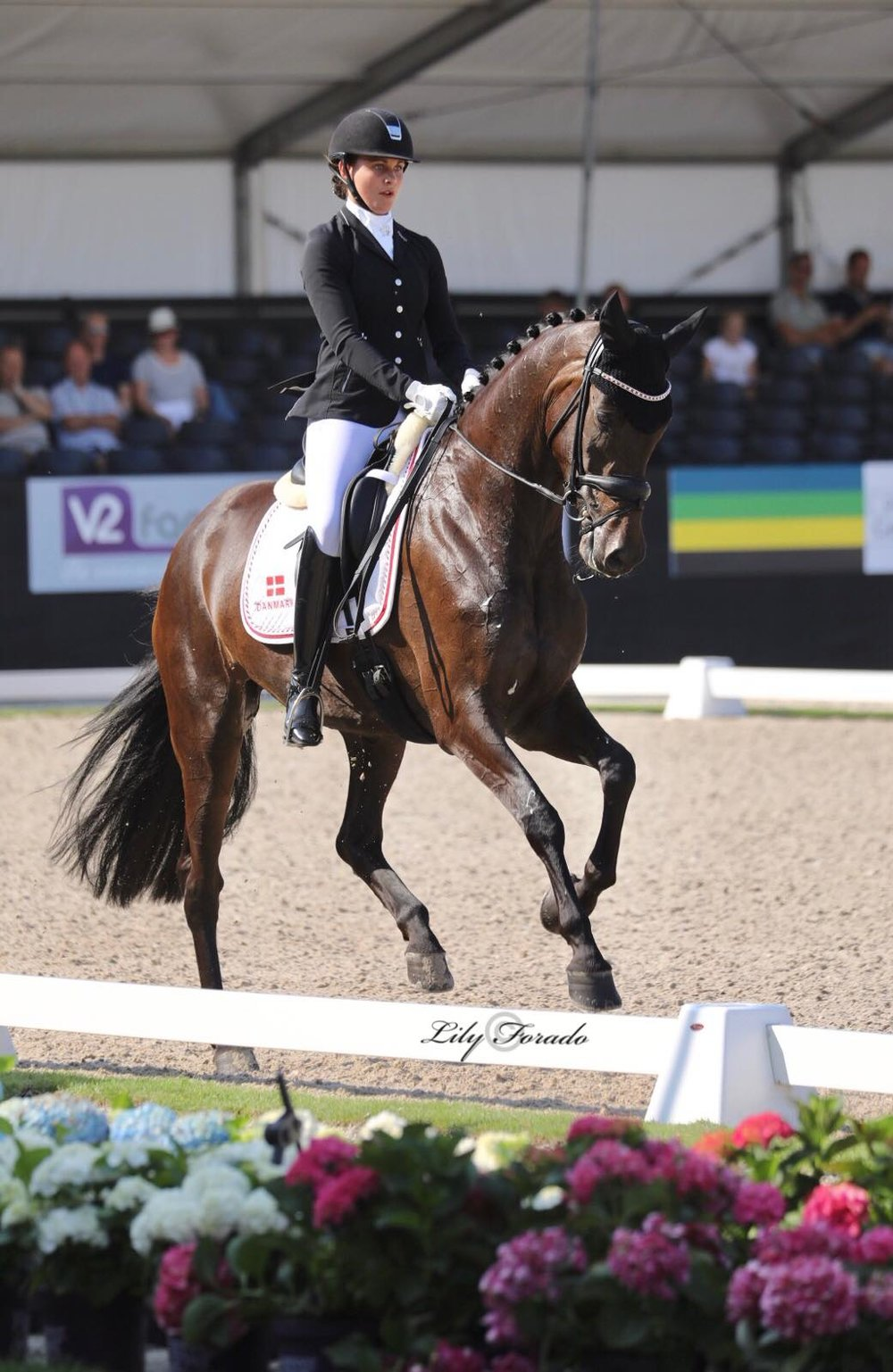 Danish Warmblood Straight Horse Ascenzione and Victoria E. Vallentin - photo credit: Lily Forado