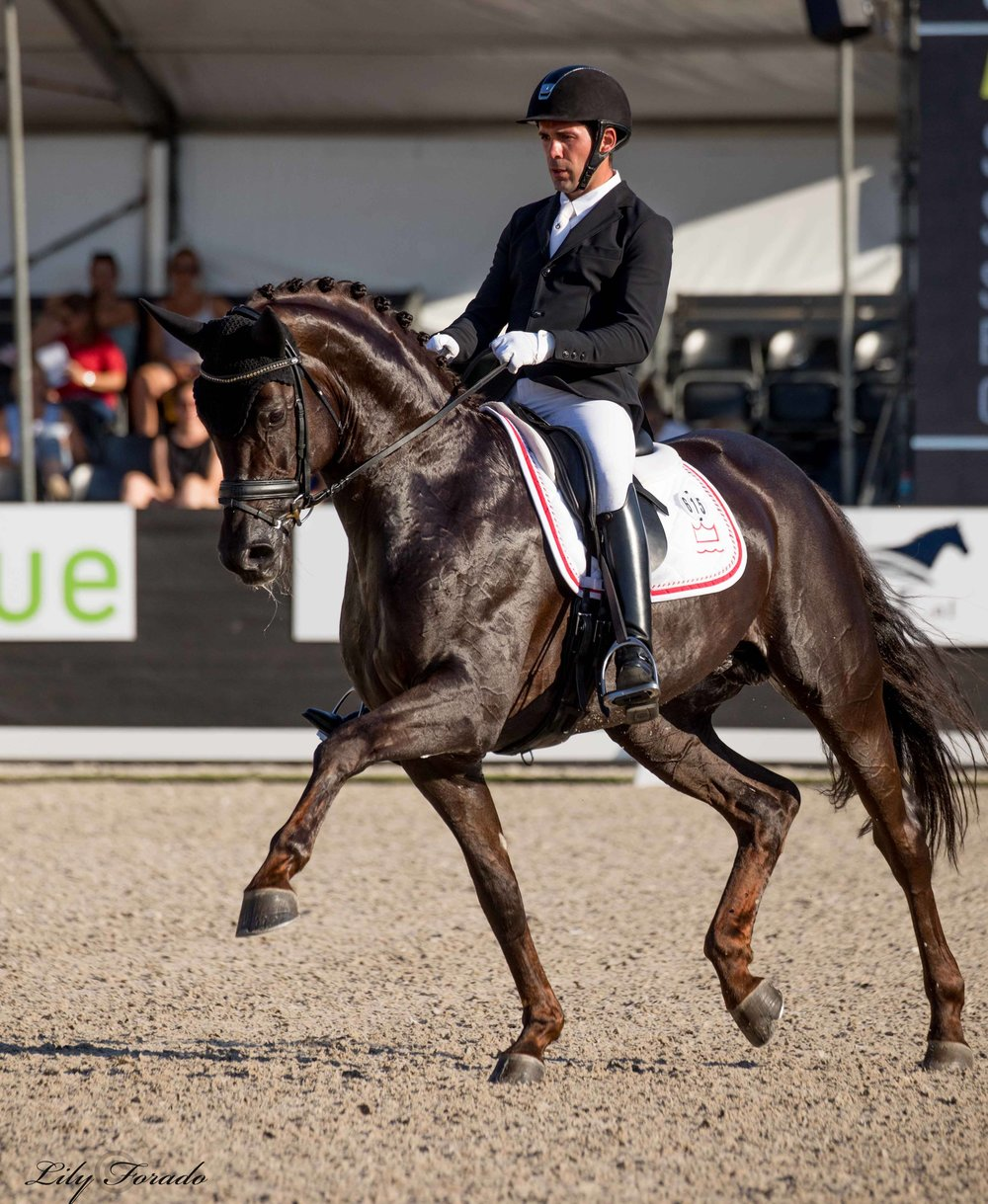 Danish Warmblood Atterupgaards Botticelli with Severo Jurado Lopes - photo credit: Lily Forado