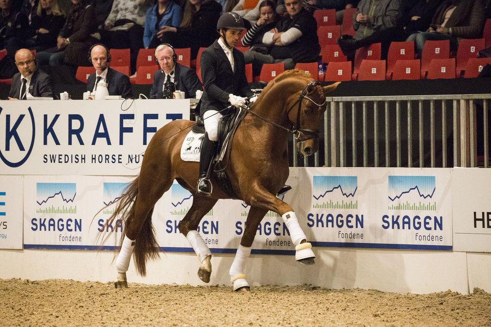 Springbank with Severo Jurado Lopez at Danish Warmblood stallion show 2018 - photo credit: H2R