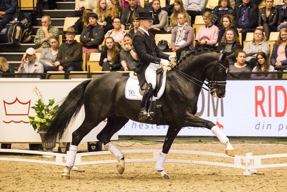 Blue Hors St. Schufro shown by Allan Grøn at Danish Warmblood stallion 2018 - photo credit: H2R