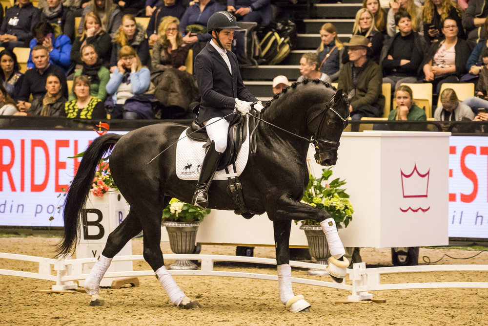 Grand Galaxy Win with Severo Jurado Lopez during 2018 Danish Warmblood stallion show - photo credit: H2R