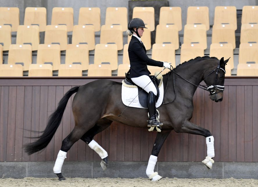 Vinetta - 4 year old mare out of very successful dam line