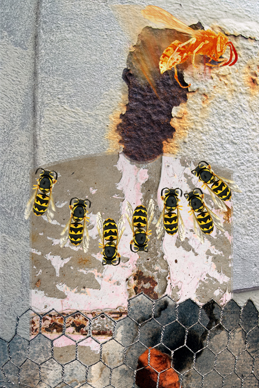 wasp_factory.jpg