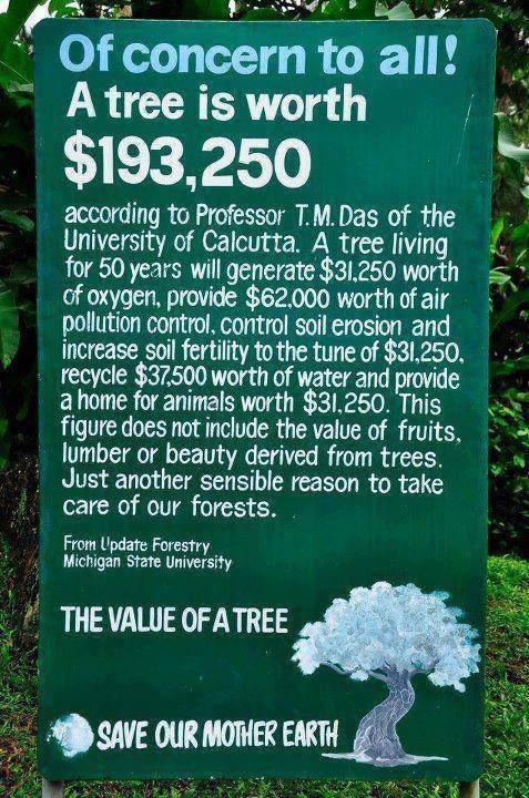 asadair :     Save Mother Earth!