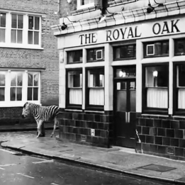royaloaklondon :     our  #unexpectedpub on screen #unexpectedbank    http://m.youtube.com/watch?feature=relmfu&v=DXReklw3NLM     platypus scotch egg anyone? (at The Royal Oak)    my lovely local pub in East London hmmmm …