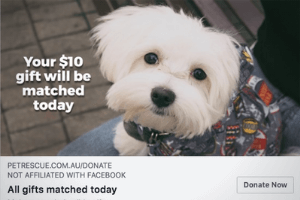 Tax time fundraising copywriting 2018 PetRescue.png
