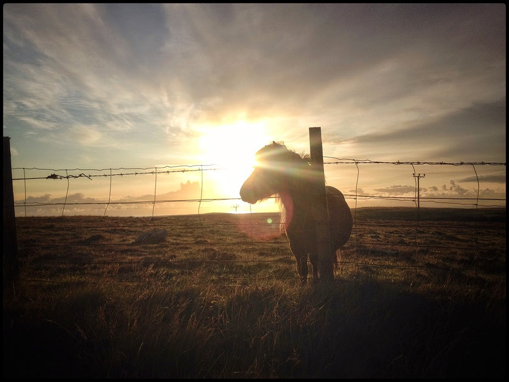 Shetland pony horse miniture little legs mane barbewire fencing sunset flare flair clouds warm windy Shetland home
