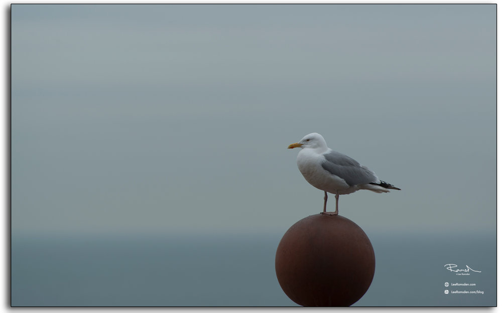 blog, sea gull, blackpool, tower, colour, color, lee ramsden
