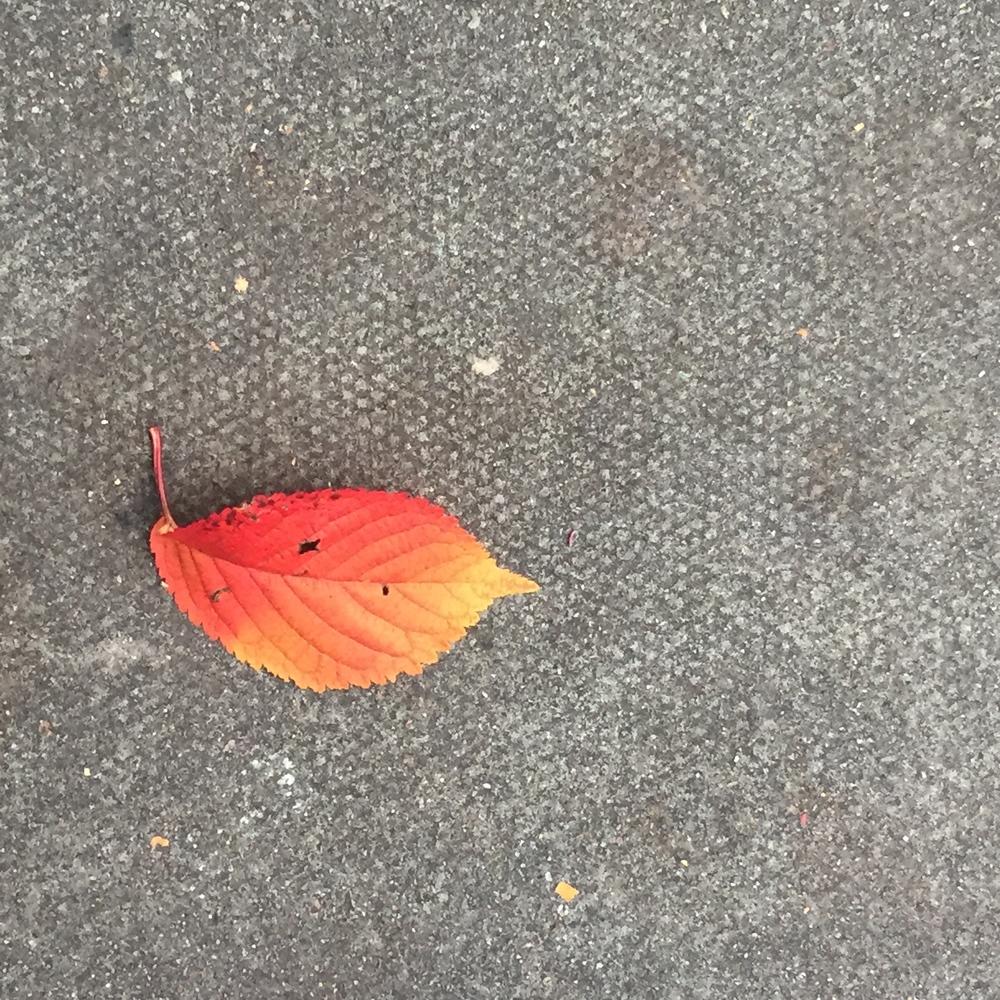 Leaf (i)